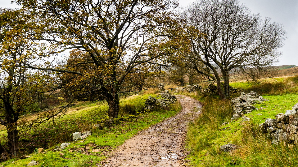 Join Team HELP in this year's Nidderdale Walk!